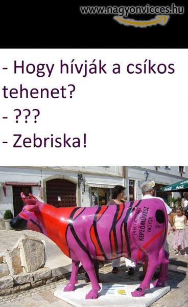 Zebriska