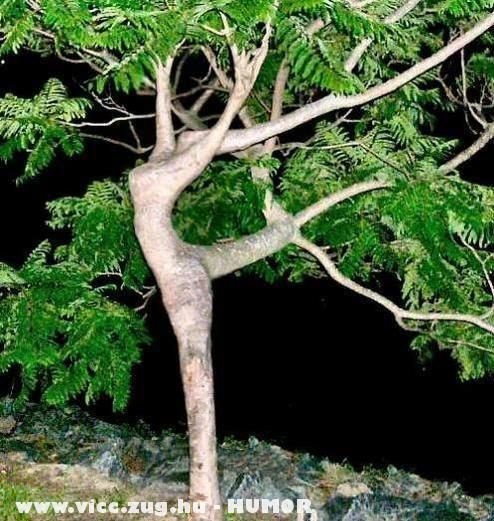 Balettfa