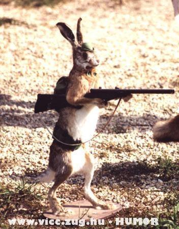 A nyúl viszi a puskát