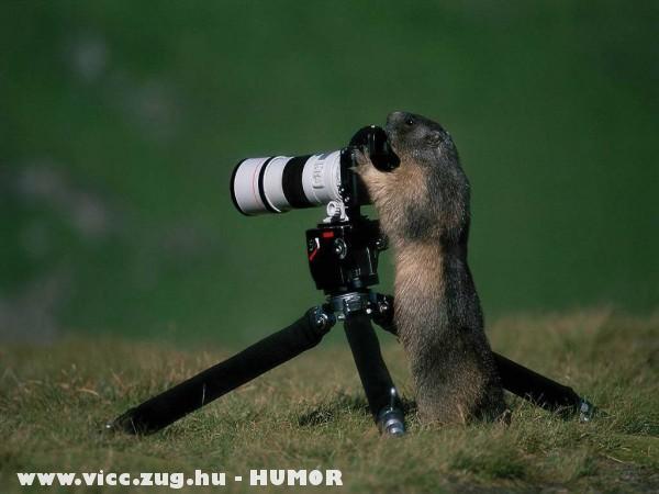Paparazzi mókus