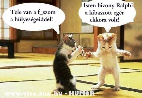 Cicák vitatkoznak