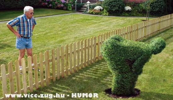 A szomszéd kertje....