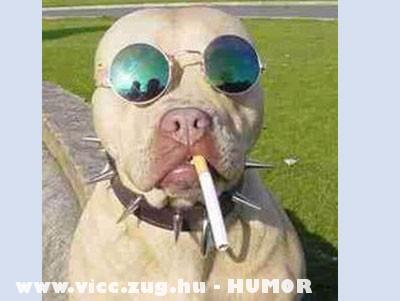 Dog Corleone