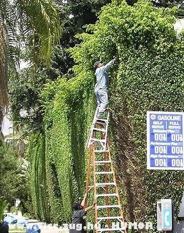 Kertészek munkában