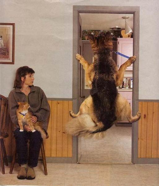 Izmi kutya