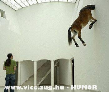 Ló befalazva