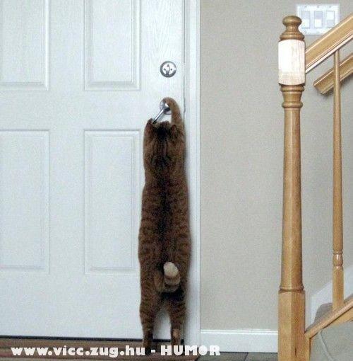Okos cica