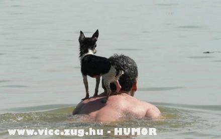 Kutyamentés