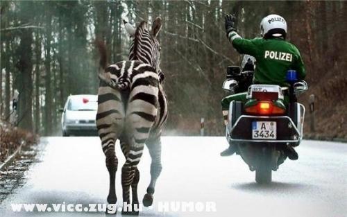 Mozgó zebra az utakon