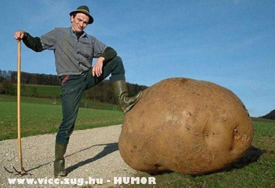 Óriás krumpli