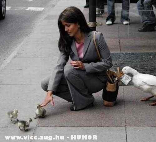 Lopnak a kacsák