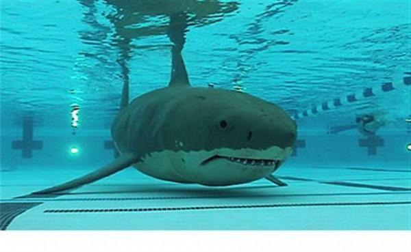 Cápa a medencében