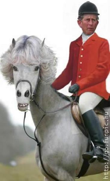 A herceg fehér lovon