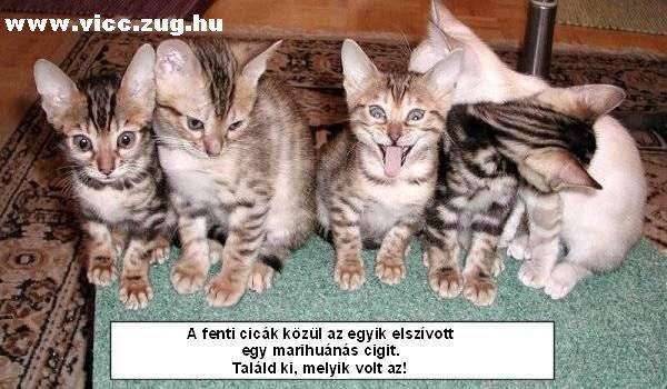 Beszívott cicus