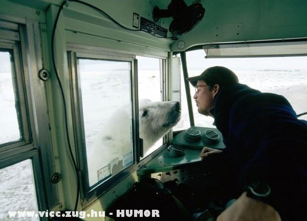 Ismerkedés a jegesmacival