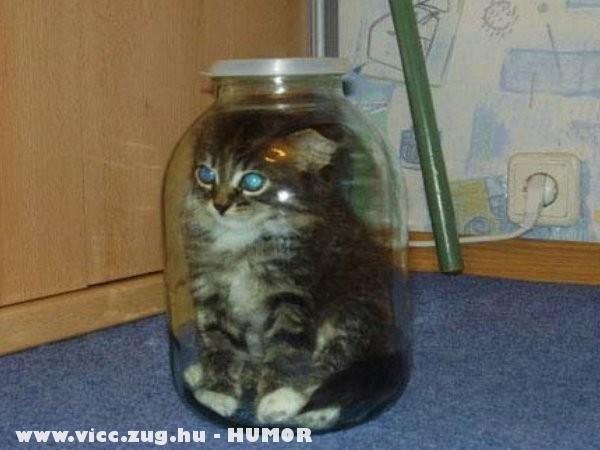 Üvegmacska - cica a duncosban