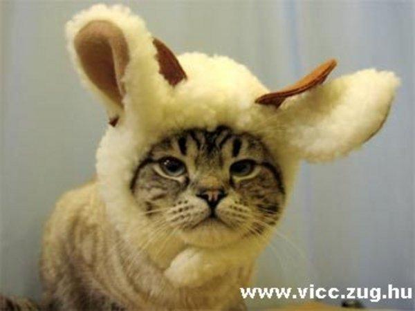 Cica, vagy mi?