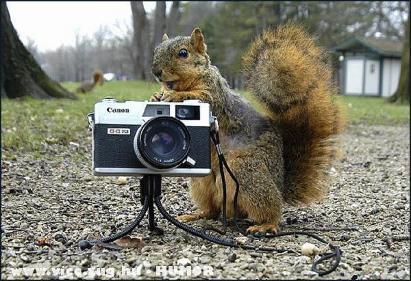 Emberlesen egy mókus