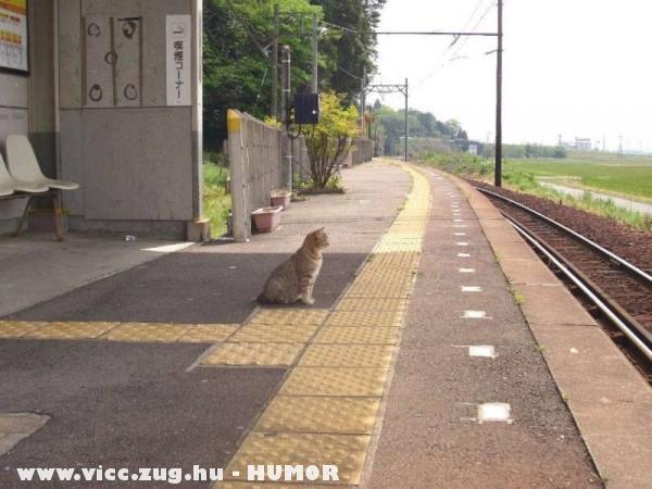 Fegyelmezetten várja a vonatot