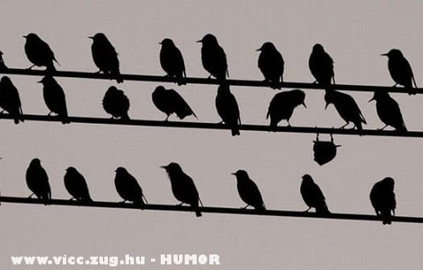 Elfáradt madár