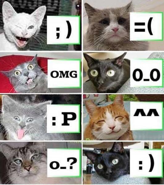 Macskamosolyok