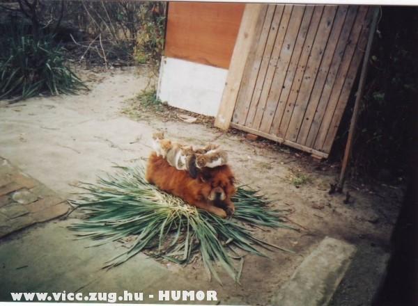 Cicák pihennek egy kutya hátán