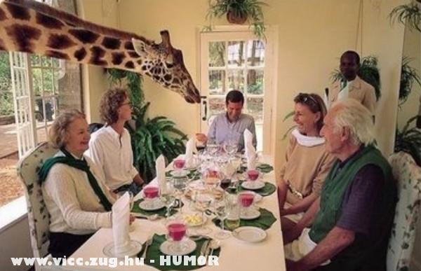 Jó ebédhez zsiráf!
