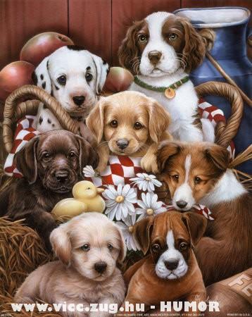Kutyók