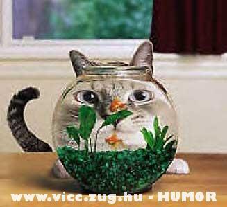 A macska kedvenc idõtöltése