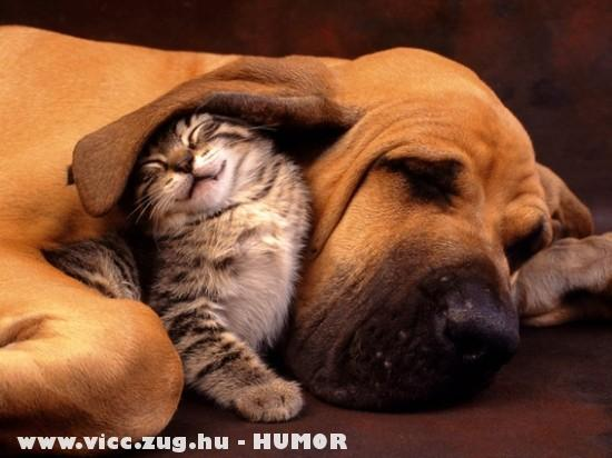 Állati barátság