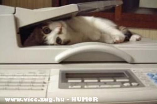 Macska a scanner-ben