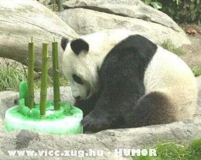 Születésnapi torta :D