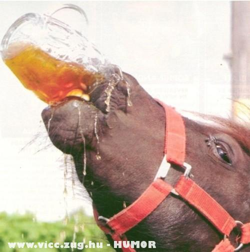 Iszik, mint a ló