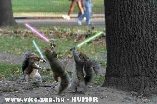 Jedi mókusok