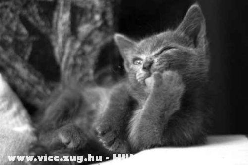 Elmélkedik a cica