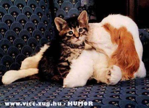 A cica és a barátja