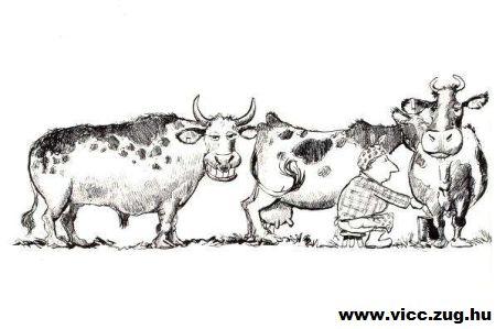 Poénos bika