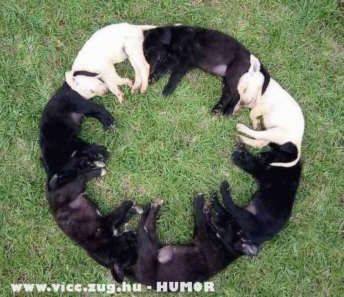 Kutya kör