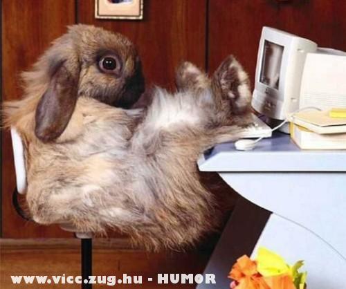 A húsvéti nyuszi online áruháza