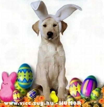 Húsvéti kutyus