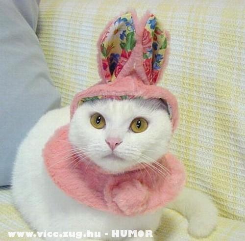 Húsvéti cicanyuszi