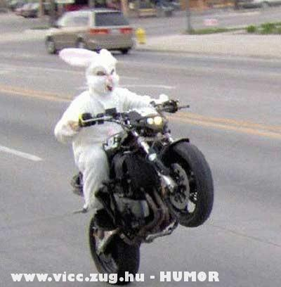 Húsvéti nyuszi pálesz után megy motorral locsolkodni