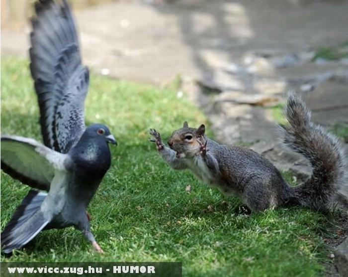 Ijesztõ mókus