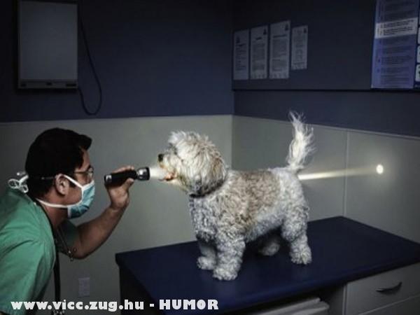 Kiskutya röntgen alatt :D