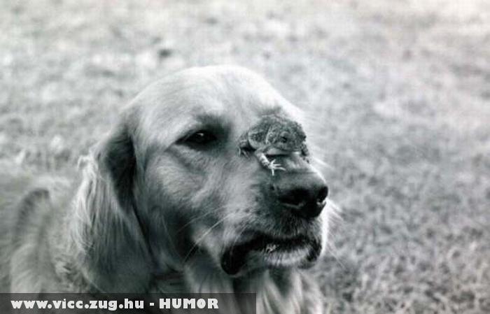 A béka és a kutyus