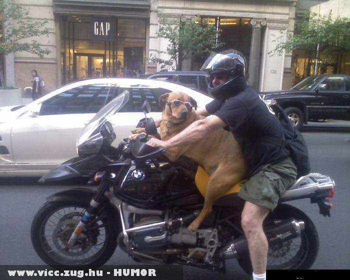 Motoros kutyó