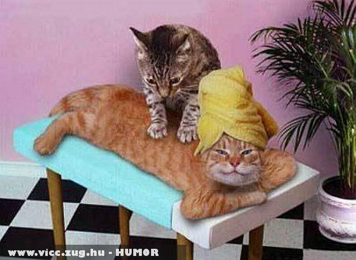 Macskamasszõr - állatterápia