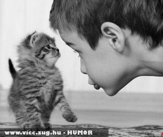 Kicsi fiú, kicsi cica