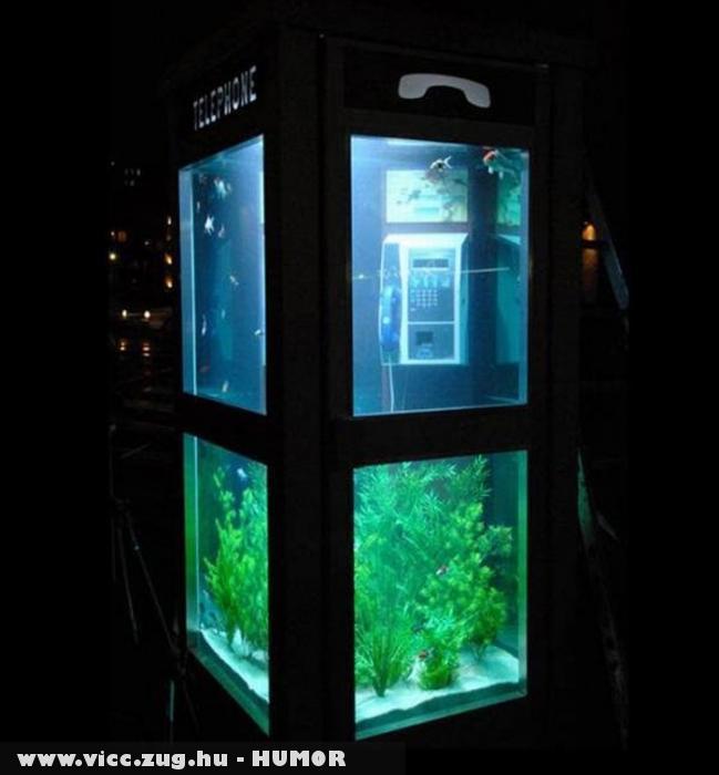 Telefonfülke akvárium