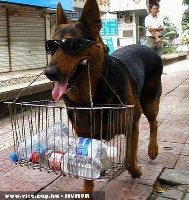 Bevásárolt a kutyus